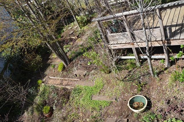 宿根草の芽吹き! 4月9日の庭。後編_c0124100_21401205.jpg
