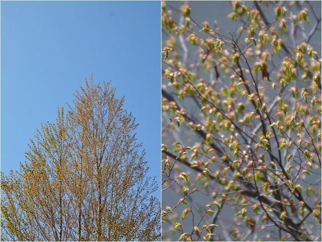 宿根草の芽吹き! 4月9日の庭。後編_c0124100_21402701.jpg