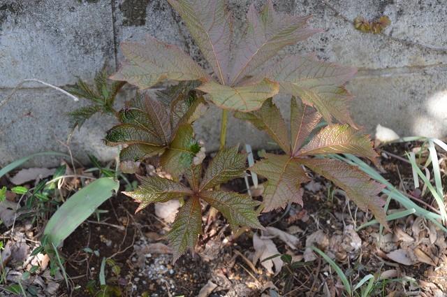 宿根草の芽吹き! 4月9日の庭。後編_c0124100_21403841.jpg