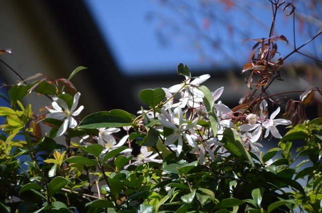 宿根草の芽吹き! 4月9日の庭。後編_c0124100_21410201.jpg
