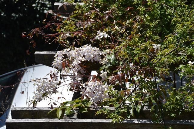 宿根草の芽吹き! 4月9日の庭。後編_c0124100_21410706.jpg