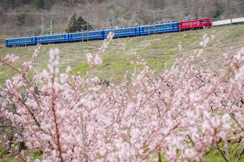 2019/4/13-14 東北本線 - ED75+12系 快速花めぐり号 -_b0183406_23095663.jpg
