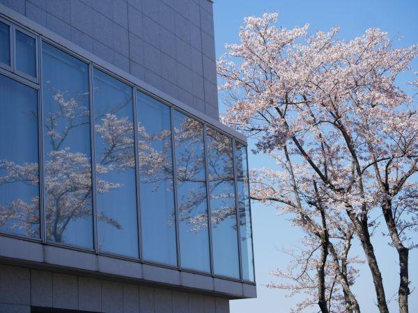 郊外の春_c0164709_06545285.jpg