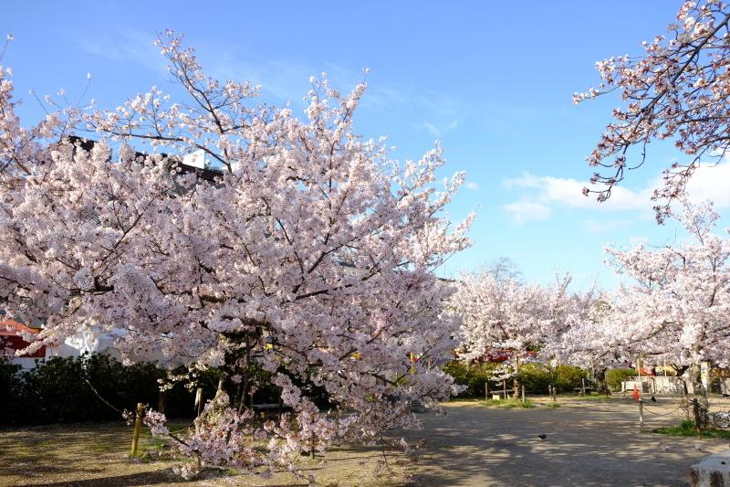 京都の旅 \'19 その1_e0000910_09165403.jpg