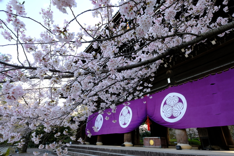 京都の旅 \'19 その1_e0000910_09233182.jpg
