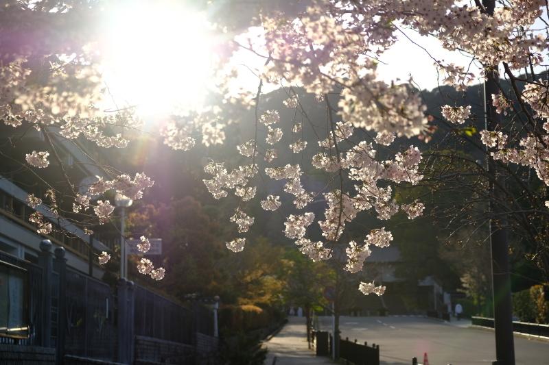 京都の旅 \'19 その1_e0000910_09262702.jpg