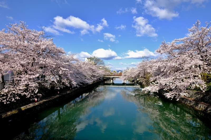京都の旅 \'19 その1_e0000910_09275172.jpg