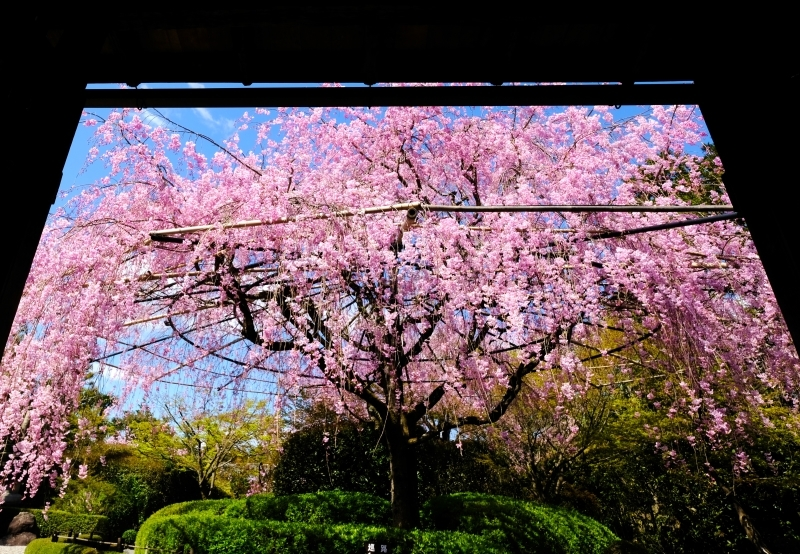 京都の旅 \'19 その1_e0000910_09511219.jpg
