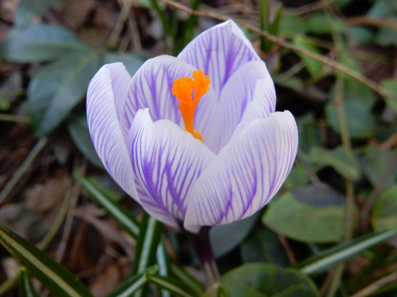 春の遅い我家の庭ですが_c0025115_22131788.jpg