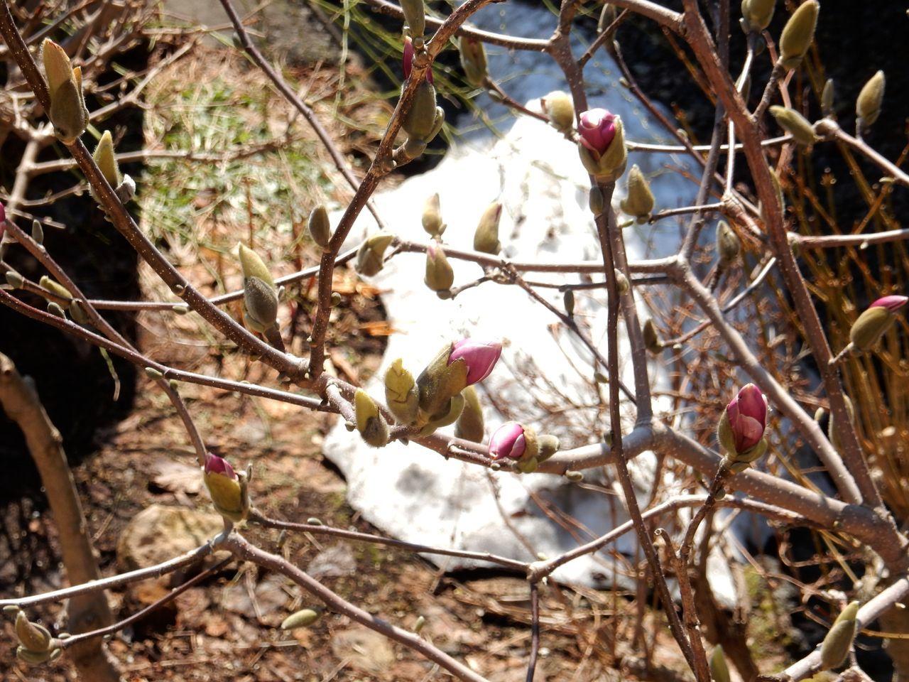 春の遅い我家の庭ですが_c0025115_22132384.jpg