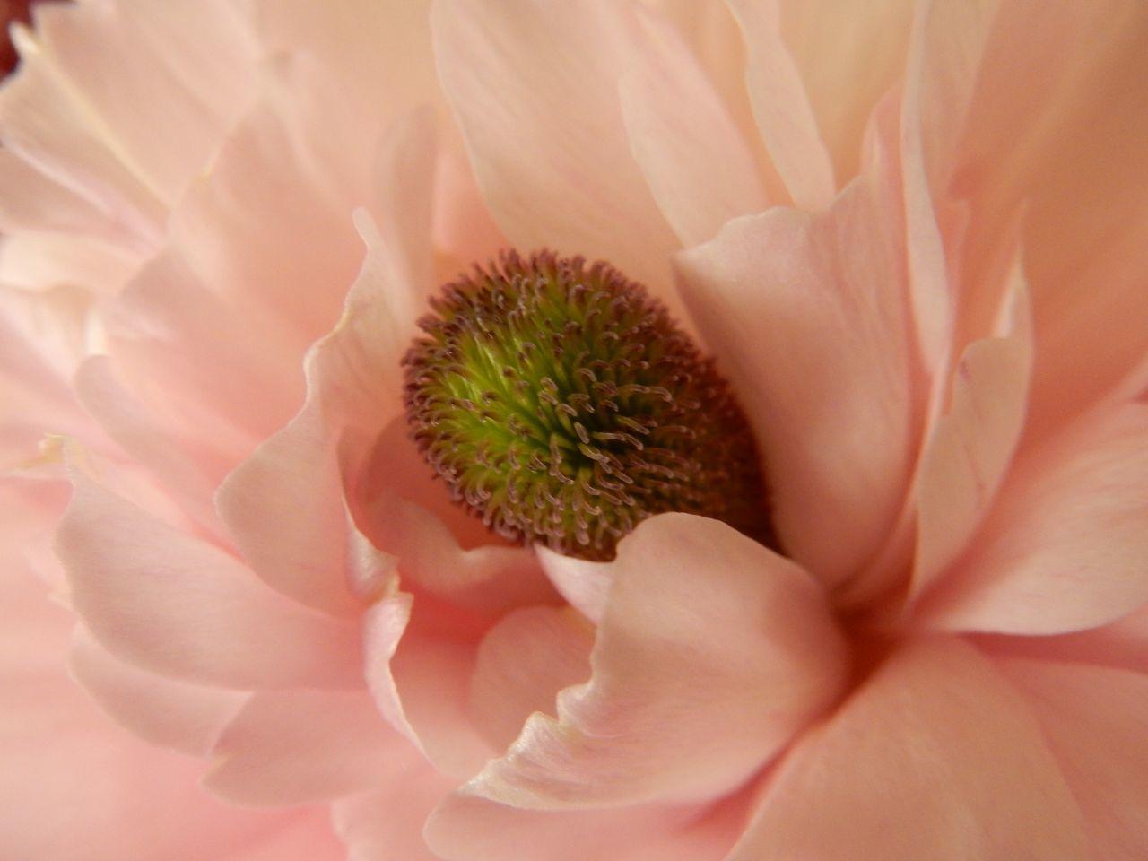 春の遅い我家の庭ですが_c0025115_22132556.jpg