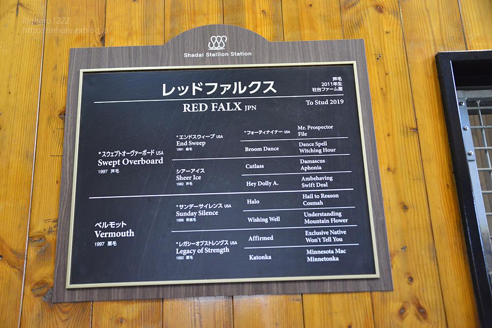 2019.3.20 社台スタリオンステーション☆レッドファルクス【Red Falx】_f0250322_2172084.jpg