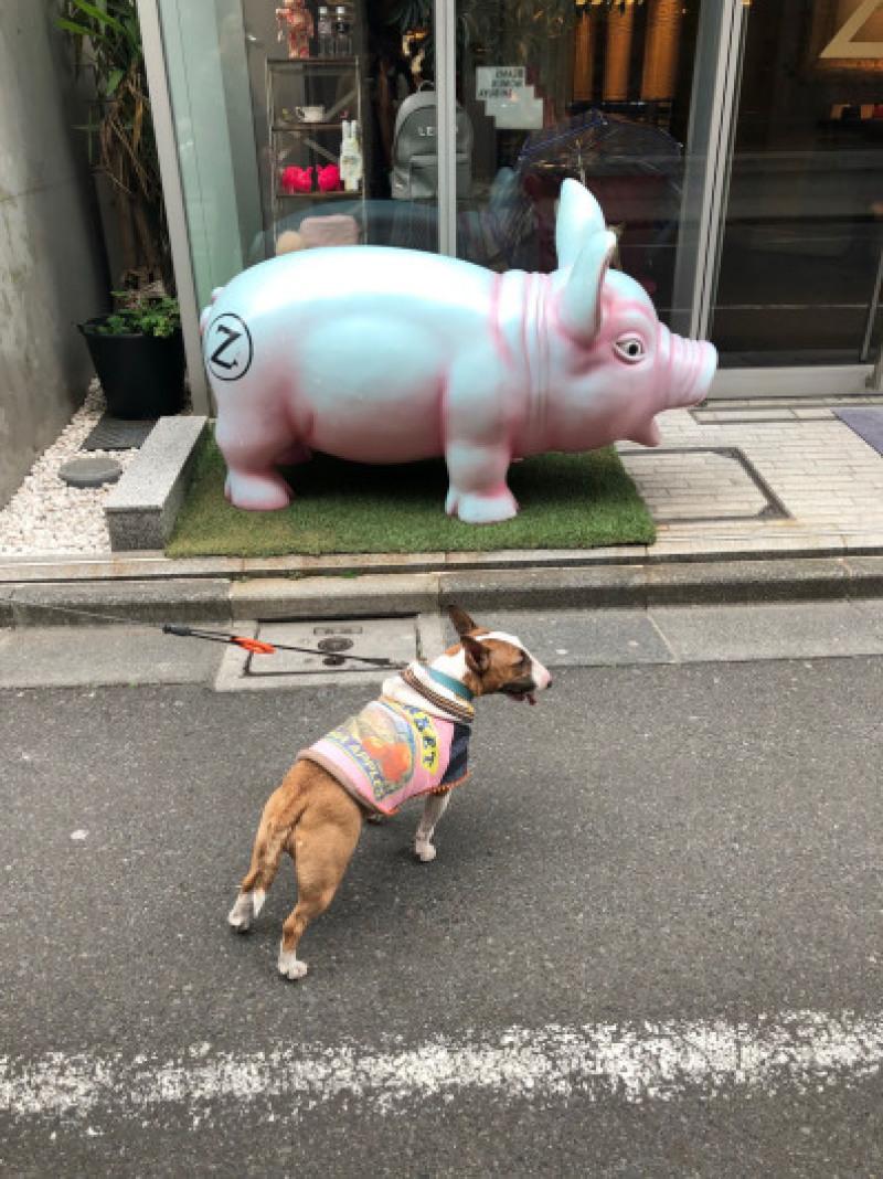 渋谷、原宿散歩した〜_b0310424_11490433.jpg