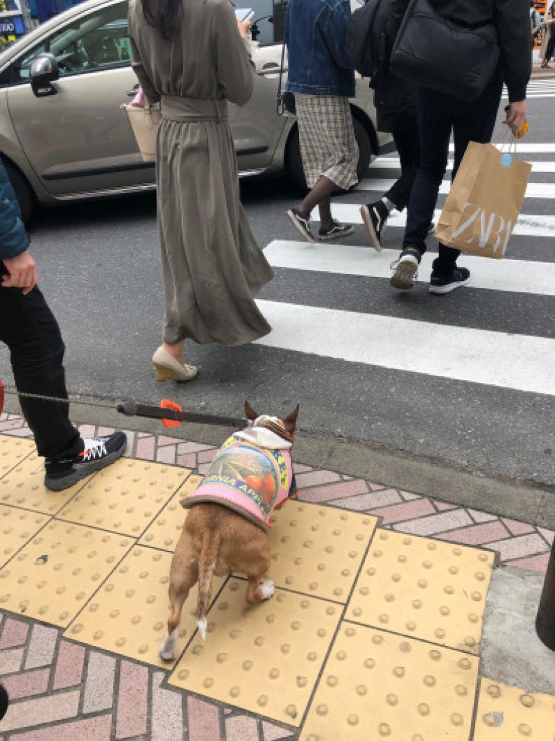 渋谷、原宿散歩した〜_b0310424_11491739.jpg