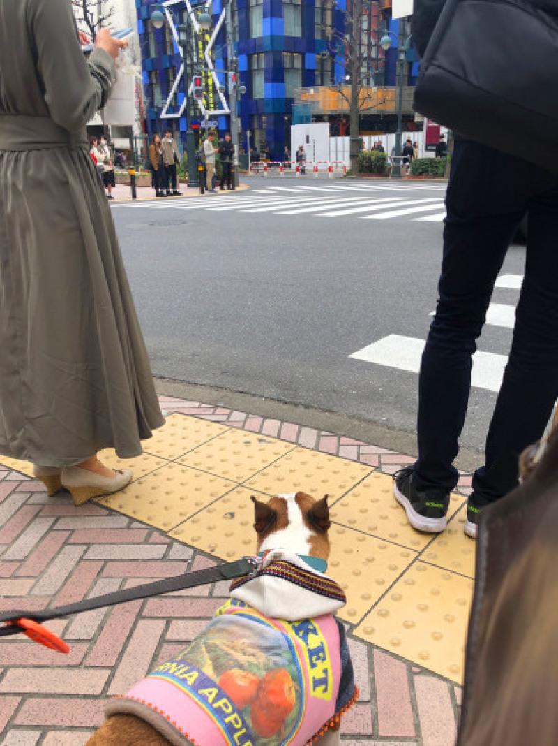 渋谷、原宿散歩した〜_b0310424_11491846.jpg
