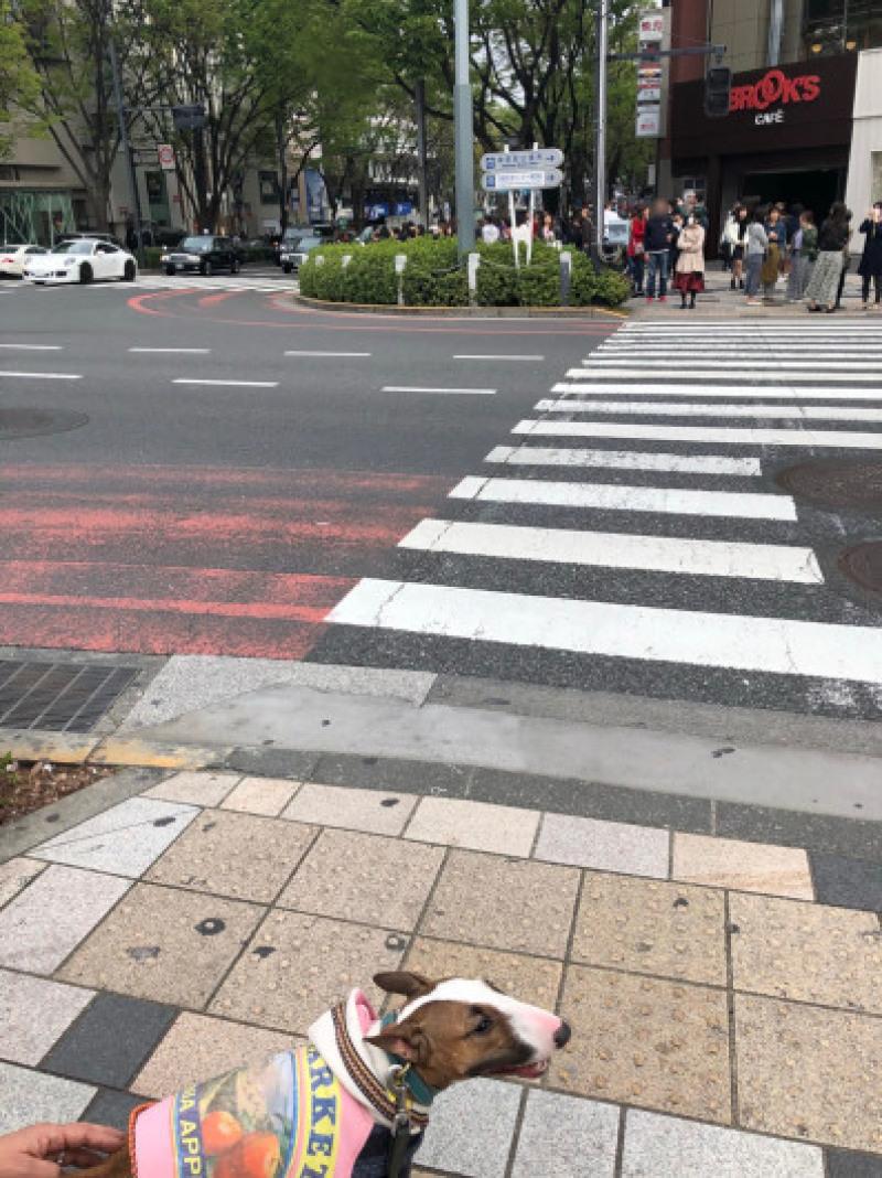 渋谷、原宿散歩した〜_b0310424_11492737.jpg