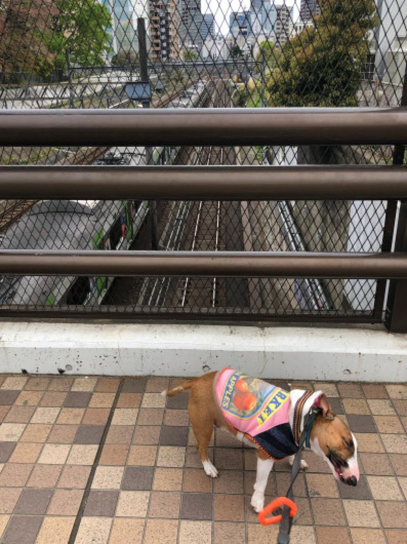渋谷、原宿散歩した〜_b0310424_11492851.jpg