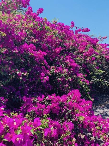 ハワイ島のお花たち♡_c0187025_12110570.jpg