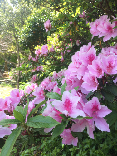 4月20日《春来 Spring》_e0103327_22211925.jpg
