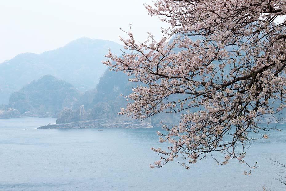 桜便り´19 #8_c0067040_22221831.jpg