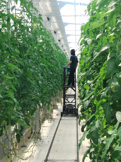 新規就農でトマト施設園芸〈いわて若江農園さん〉_b0199244_15193214.jpg