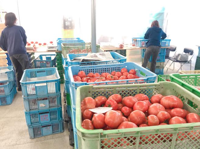 新規就農でトマト施設園芸〈いわて若江農園さん〉_b0199244_15193916.jpg