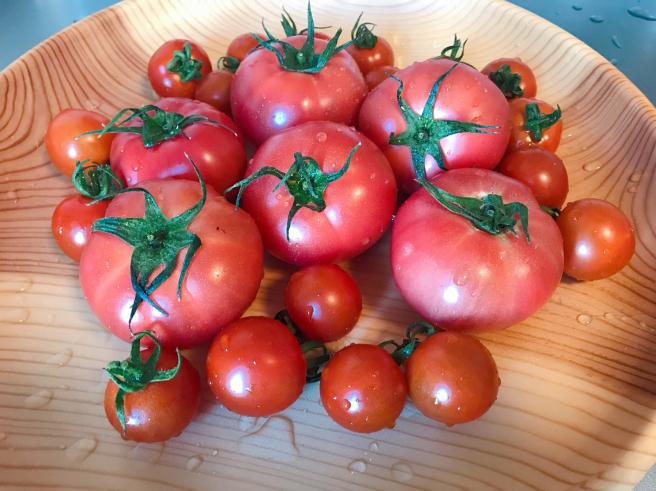 新規就農でトマト施設園芸〈いわて若江農園さん〉_b0199244_21542523.jpg