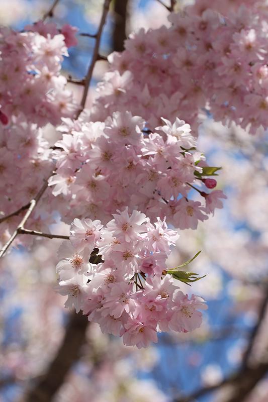 京都地方裁判所_b0186148_19092010.jpg