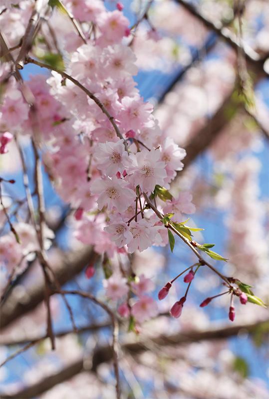 京都地方裁判所_b0186148_19093604.jpg