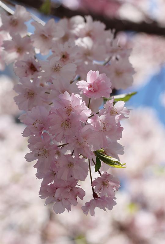 京都地方裁判所_b0186148_19095427.jpg