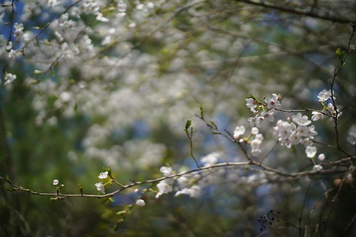 春の驚愕...そして_f0057849_1854233.jpg