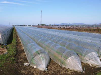 有機栽培の水田ごぼう まもなく平成31年度の先行予約受付スタート!収穫前の様子を現地取材!_a0254656_19253363.jpg