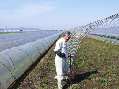 有機栽培の水田ごぼう まもなく平成31年度の先行予約受付スタート!収穫前の様子を現地取材!_a0254656_19322173.jpg