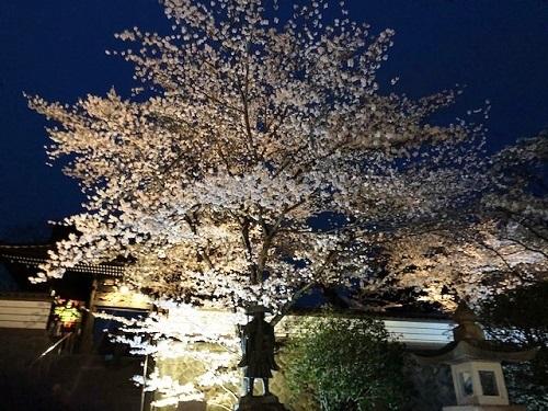 桜が満開_e0211357_09514518.jpg