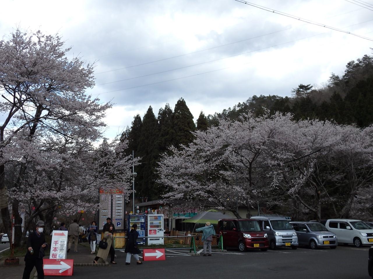 『寺尾ヶ原千本桜公園を歩いて』_d0054276_20561883.jpg