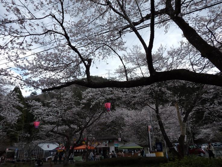 『寺尾ヶ原千本桜公園を歩いて』_d0054276_20563811.jpg