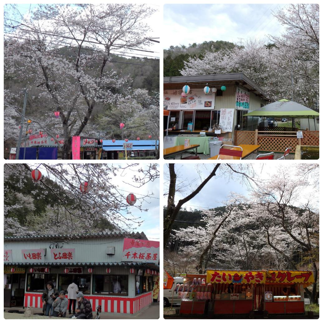 『寺尾ヶ原千本桜公園を歩いて』_d0054276_20564845.jpg