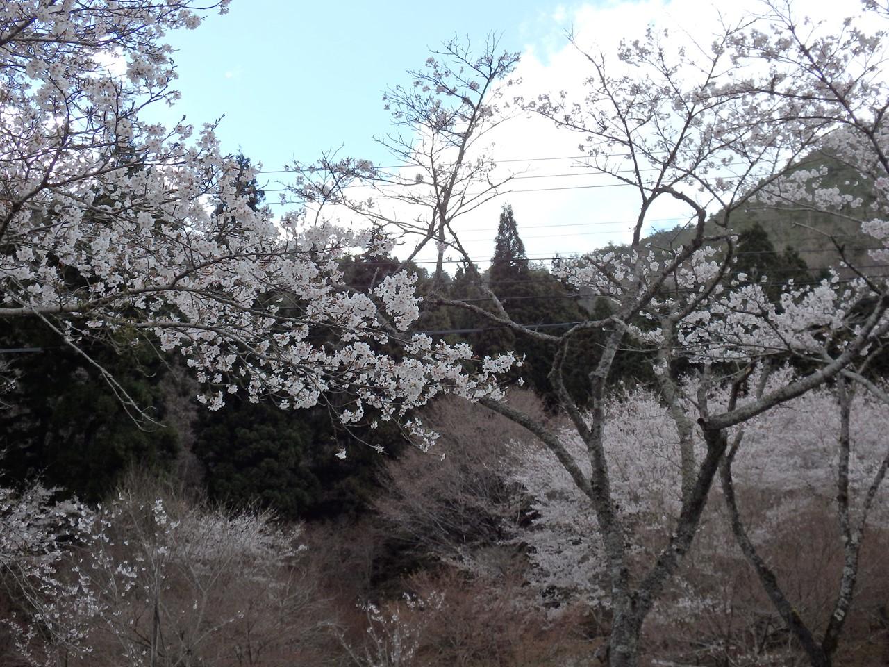 『寺尾ヶ原千本桜公園を歩いて』_d0054276_20565744.jpg