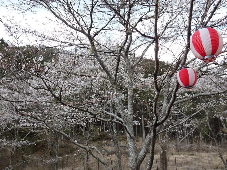 『寺尾ヶ原千本桜公園を歩いて』_d0054276_2056638.jpg