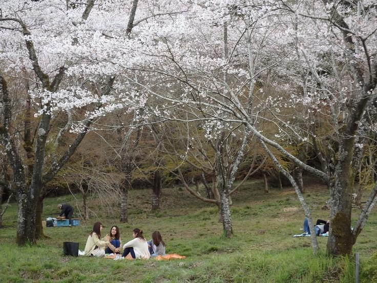 『寺尾ヶ原千本桜公園を歩いて』_d0054276_20572815.jpg
