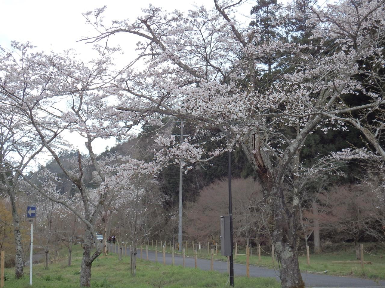 『寺尾ヶ原千本桜公園を歩いて』_d0054276_20573892.jpg