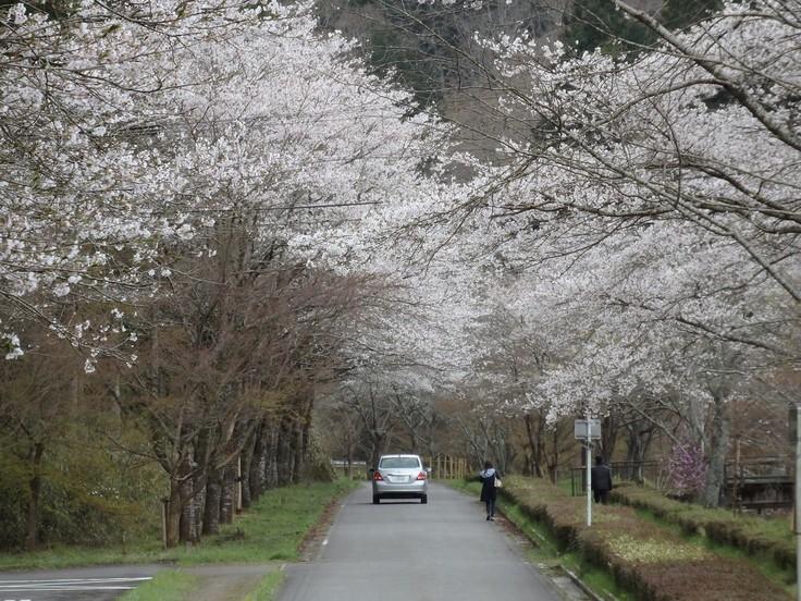 『寺尾ヶ原千本桜公園を歩いて』_d0054276_20575097.jpg