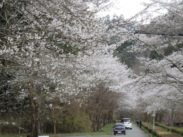 『寺尾ヶ原千本桜公園を歩いて』_d0054276_20581825.jpg