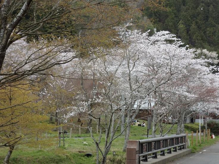 『寺尾ヶ原千本桜公園を歩いて』_d0054276_20582847.jpg