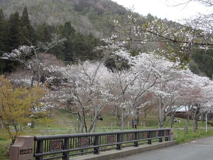 『寺尾ヶ原千本桜公園を歩いて』_d0054276_20583796.jpg