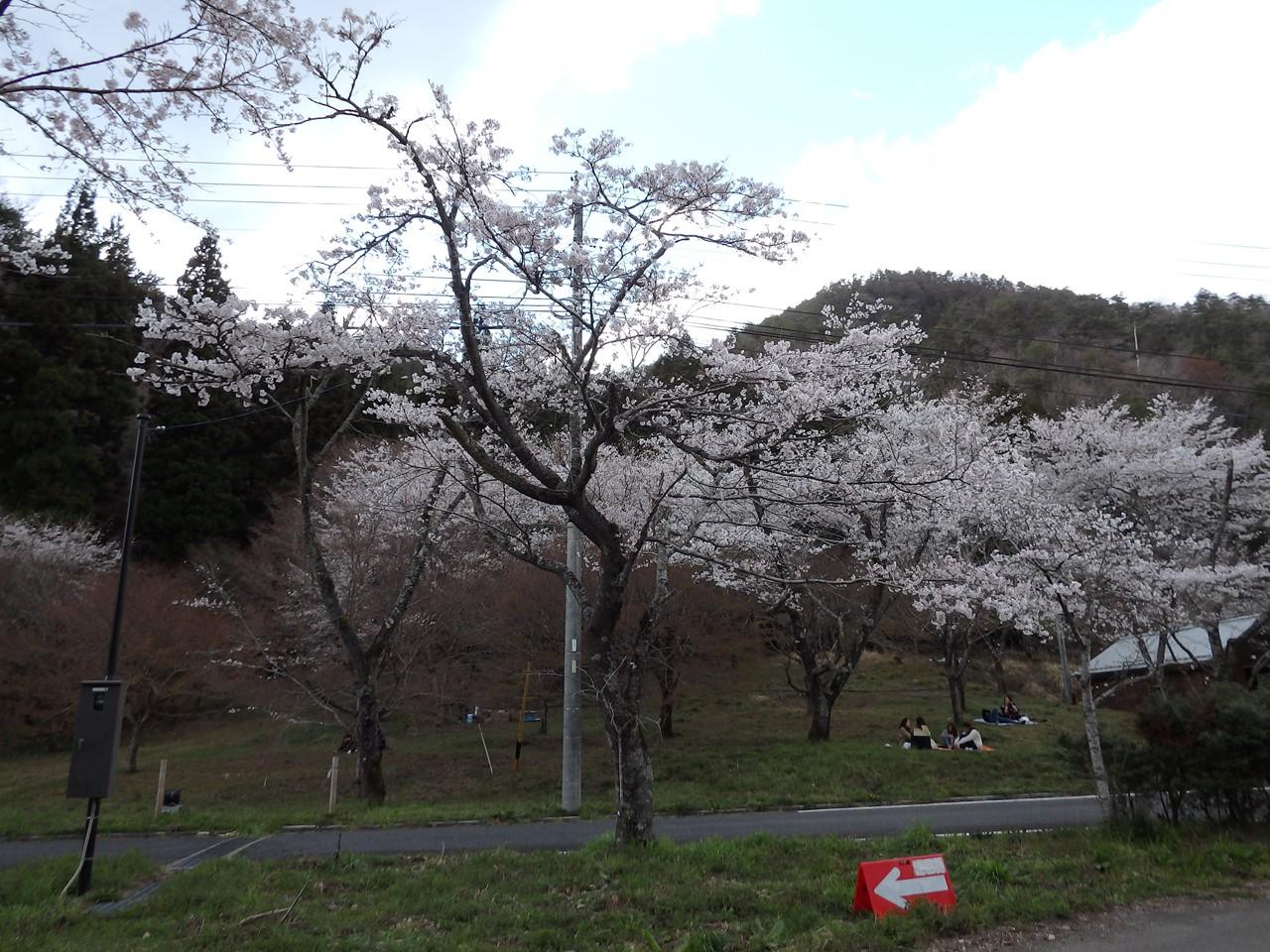 『寺尾ヶ原千本桜公園を歩いて』_d0054276_20584997.jpg