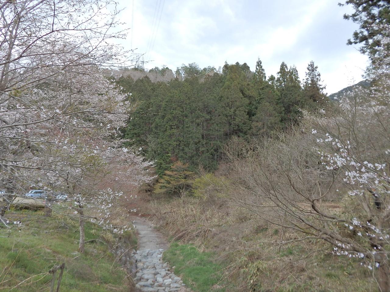 『寺尾ヶ原千本桜公園を歩いて』_d0054276_20585937.jpg