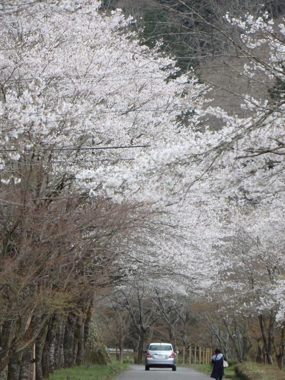 『寺尾ヶ原千本桜公園を歩いて』_d0054276_2058854.jpg