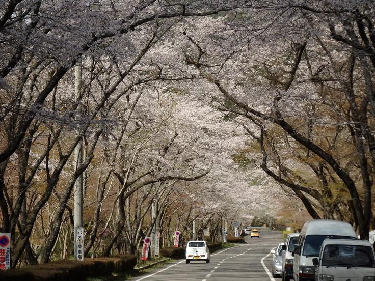 『寺尾ヶ原千本桜公園を歩いて』_d0054276_20591841.jpg