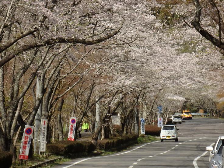 『寺尾ヶ原千本桜公園を歩いて』_d0054276_20592882.jpg